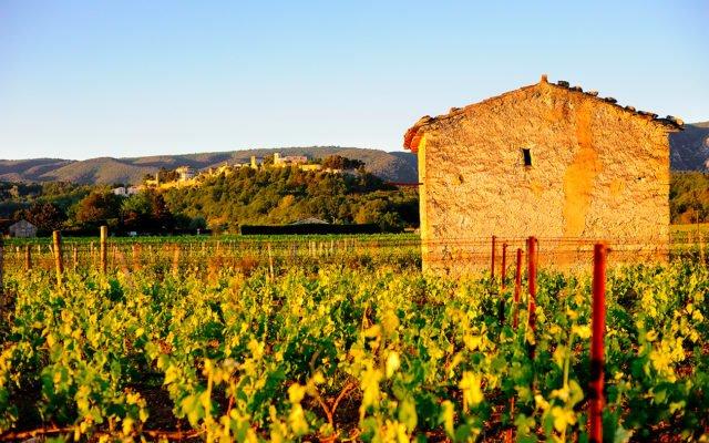 Vignes - Cabanon - Domaine de la Citadelle